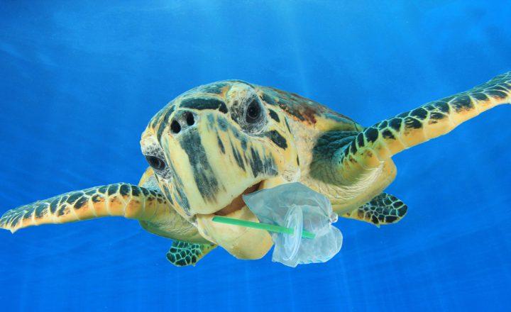 Nein zu Plastik – Ja zur Papiertüte