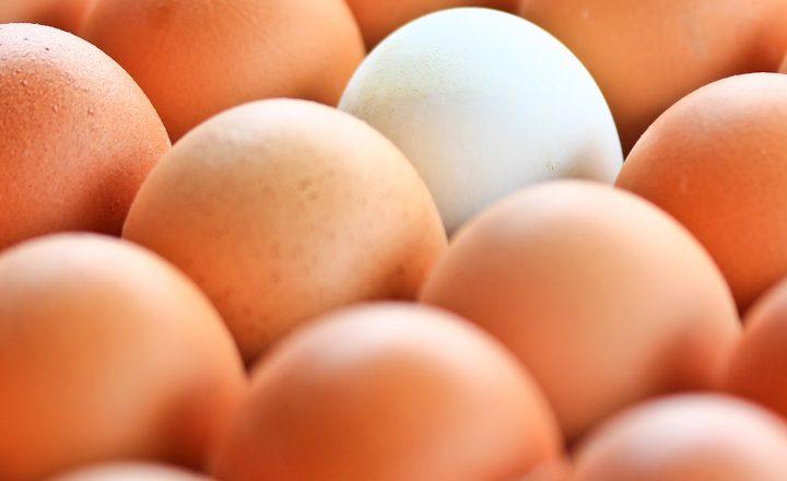 Preiserhöhung! Discount-Eier teurer