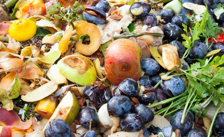 Zu gut für den Müll – Lebensmittel retten