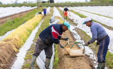 Ministerien einigen sich: 80.000 Erntehelfer dürfen einreisen