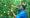 Partnerschaft für Nachhaltigen Orangensaft (PANAO) gegründet